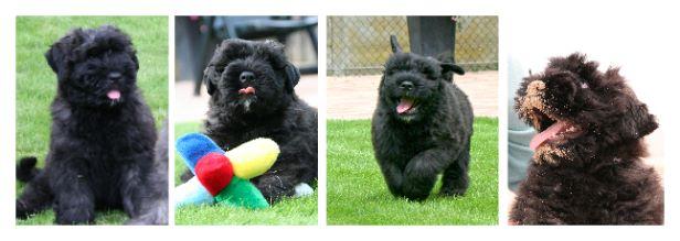 De 8 beste tips voor het opvoeden van een puppy  MaxampLuna